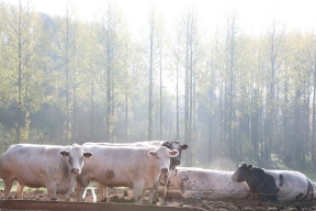 boerderij2115