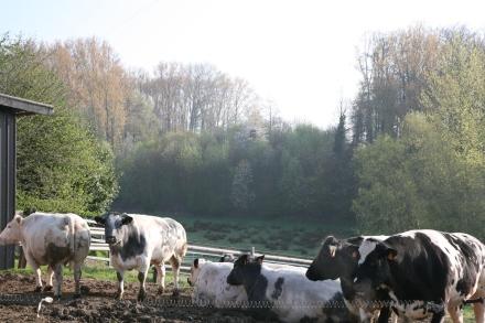 boerderij2116