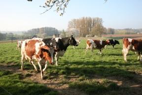 boerderij2121