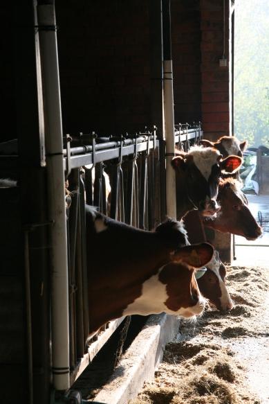 boerderij2124