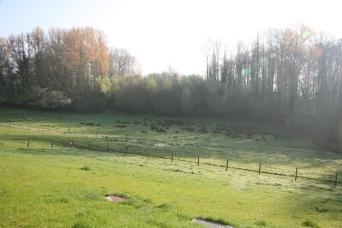 boerderij215
