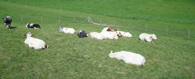 Vlaamse Ardennen boerderij vakantie verblijf
